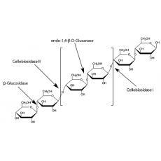 纤维素酶R-10